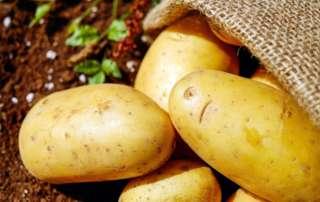 Imagen portada patata